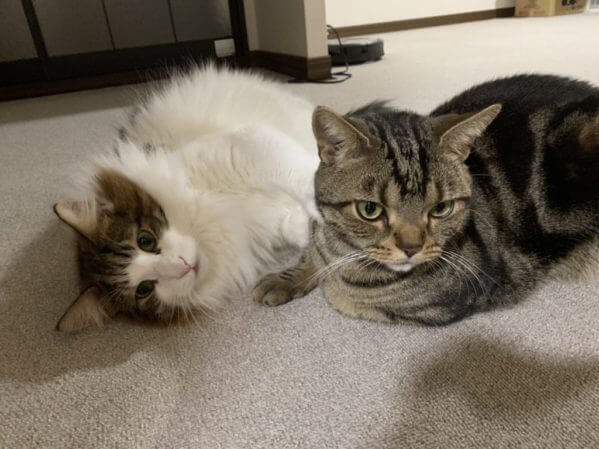 仲の良い先住猫と新入り猫